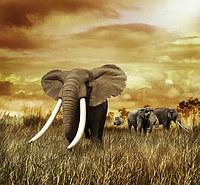 tablou elefanti (4)