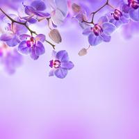Tablou canvas orhidee (55)