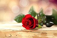 tablou trandafiri (10)