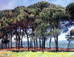 tablou claude monet   pine trees, cap d'antibes, 1888