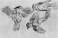 Tablou canvas van gogh - studies of a dead sparrow, 1885