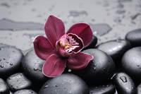 tablou orhidee (64)