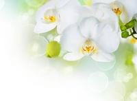 Tablou canvas orhidee (65)