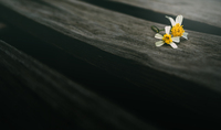 tablou flori, bicolor (1)