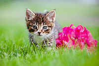 tablou pisica (11)