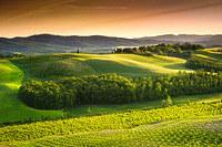 tablou toscana, italia (2)