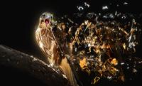 tablou vultur (6)