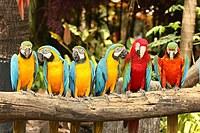 tablou papagali (2)