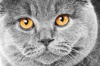 tablou pisica (14)