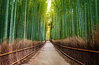 tablou bambus (14)