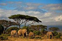 Tablou canvas elefanti (2)