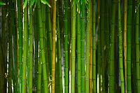 tablou bambus (12)