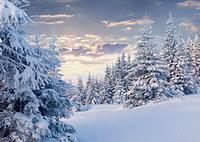 tablou iarna (31)