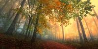 tablou natura (664)