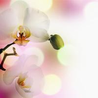 tablou orhidee (57)