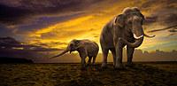 tablou elefanti (3)