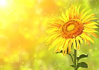 tablou floarea soarelui (36)