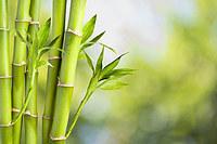 tablou bambus (11)