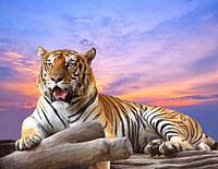 Tablou canvas tigru (5)