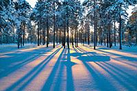 tablou iarna (32)