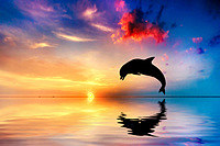 tablou delfin (3)