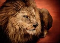 tablou leu (10)