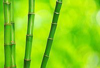 tablou bambus (9)
