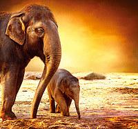 tablou elefanti (5)
