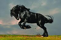 tablou cai (68)