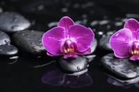 Tablou canvas orhidee (63)