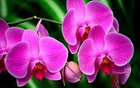 Tablou canvas orhidee (62)