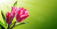Tablou canvas flori (70)