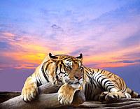 tablou tigru (6)