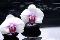 tablou orhidee (69)
