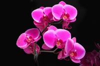 Tablou canvas orhidee (61)