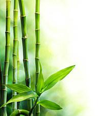 tablou bambus (10)