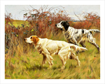 tablou english setters 2