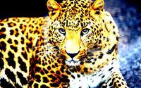 Tablou canvas leopard (10)