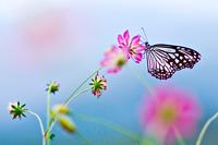Tablou canvas flori si fluturi (39)