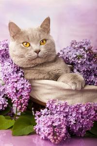 Tablou canvas pisica (13)
