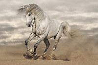 tablou cai (53)