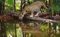 tablou leopard (19)