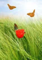 tablou Fluturi si maci 2