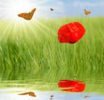 tablou Fluturi si maci 3