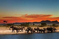 tablou elefanti (1)