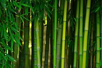 tablou bambus (13)