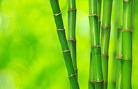 tablou bambus (8)