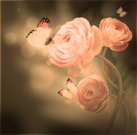 Tablou canvas trandafiri (22)