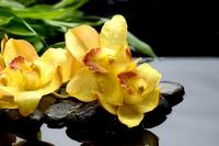 Tablou canvas orhidee (67)