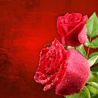 Tablou canvas trandafiri (43)